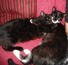 My cats Mingau e Rocambole