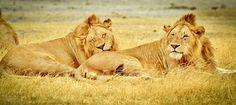 Tansania, Serengetin Kansallispuisto