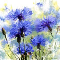 Rachel Mcnaughton - Cornflowers