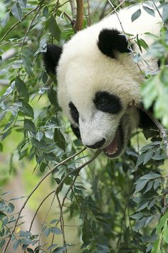 Yun Zi looks down on the people below | Flickr - Photo Sharing!