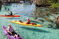 Google Image Result for http://www.conservationfund.org/sites/default/files/akers_manatees_three_sisters_springs_300x200.jpg