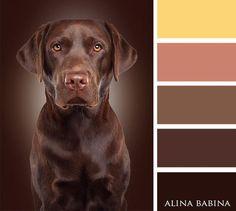 lab colours #shadesofanimalpaintcolours