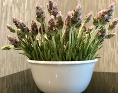 French Lavender from my garden