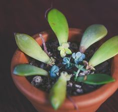 Propagation Prep: The 5 Basics – Succulent Studios Succulent Cuttings, Propagating Succulents, Succulent Care, Planting Succulents, Mother Plant, Propagation, Art Of Living, Plant Care, Air Plants