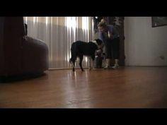 Separation Anxiety - mild case - positive reinforcement dog training