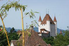 BnB Daisy Thun in der Schweiz Bern, Bed And Breakfast, Daisy, Switzerland, Margarita Flower, Daisies
