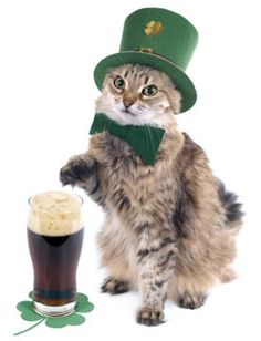 Save that green beer for your human guests on St. Patrick's Day, and give your kitty clean, fresh water.