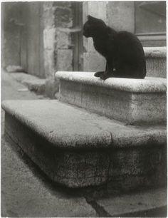 Black Cat on Steps cat photography by Brassai - aka Gyula Halasz Cat Photography, Vintage Photography, Street Photography, Crazy Cat Lady, Crazy Cats, Georges Pompidou, Brassai, French Photographers, Photo Black