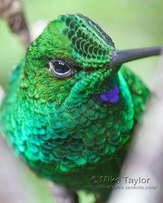 Close up of this bird