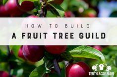 How to Build a Fruit Tree Guild | Tenth Acre Farm