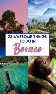 23 of the Best things to do in Borneo in Sabah, Sarawak, Kalimantan and Brunei. Covers both Malaysian and Indonesian Borneo. Find out about the best activities in Borneo and the best places to visit to make your backpacking Borneo trip just awesome! Top Travel Destinations, Best Places To Travel, Amazing Destinations, Cool Places To Visit, Places To Go, Borneo Travel, Malaysia Travel, Asia Travel, Travel Info