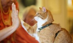 Your Cat Probably Loves You. Science Says So. - Newsy