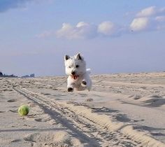 Airborne! Give me my ball!