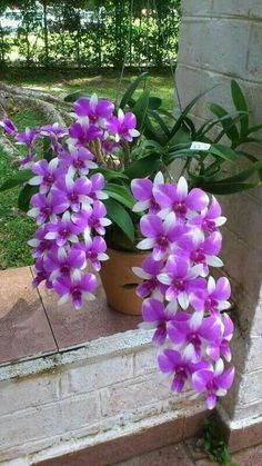 beautiful flowers greeting for tuesday Purple And White Flowers, Flower Garden, Purple Flowers, Pretty Flowers, Planting Flowers, Flower Pots, Unusual Flowers, Amazing Flowers, Orchid Flower
