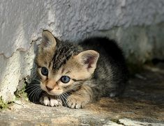 Lil' Hunter (Feral / Stray kitten) by Roeselien Raimond, via Flickr