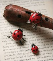 Who doesn't like lady bugs?  They're magnets...