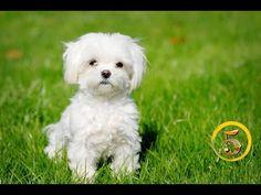 Złota Piątka: Najpiękniejsze rasy psów! - YouTube