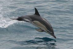Минобороны РФ закупает дельфинов. Сегодня по 350000