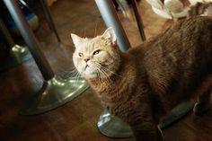 Cats in Korea Korea, Cats, Animals, Gatos, Animales, Kitty Cats, Animaux, South Korea, Cat