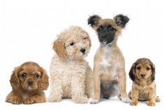 Puppy13_full