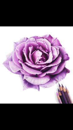 Pencil Drawing Tutorials, Pencil Drawings, Blending Colored Pencils, Shading Drawing, Oil Pastel Colours, Art Inspiration Drawing, Art Drawings Sketches Simple, Polychromos, Cartoon Art Styles
