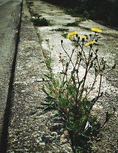 dal cemento nascono fiori by fko @ http://adoroletuefoto.it