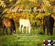 Fall is a great time to join the team! With tuition discounts and more - it's time to turn your passion for horses into a rewarding career! Emergency First Aid, Visa Card, Fall Harvest, Dream Life, Announcement, Career, Join, Passion, Horses
