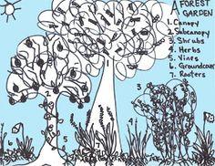Edible forest garden layers