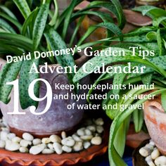 David Domoney's Garden Tips Advent Calendar Day 19