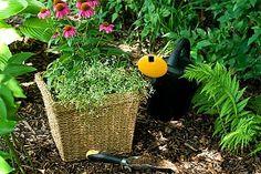 Mid summer gardening