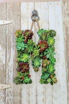 Succulents 101: Growing, Propagating, Projects and More. Succulent letter wreath.