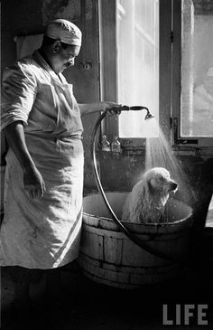 Dog Bath by Mark Kauffman. 1950