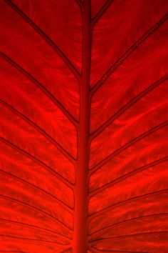 »✿❤Carleen❤✿« Red Leaf