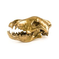 """Diesel Living with Seletti Wunderkammer """"Wolf This Way"""" Wolf Skull. A collectable that tells it's own unique story"""