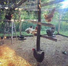 Chicken coops not only help provide a comfortable environment for your fowl but also provide shelter and a happy place for your chickens to be productive. A good chicken coop always starts with proper planning and the better you can d Chicken Pen, Chicken Coup, Chicken Life, Best Chicken Coop, Chicken Coop Plans, Building A Chicken Coop, Chicken Coop Decor, Chicken Crafts, Chicken Recipes