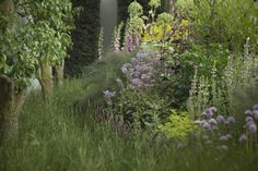 A Modern Apothecary Garden at the Chelsea Flower Show