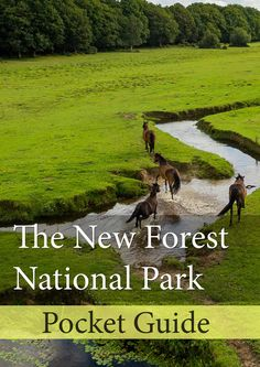 Why not try these great New Forest walks?! Walking in the New Forest is an enjoyable way to see this National Park. These walks have all been completed by myself, and very in terms of difficulty.