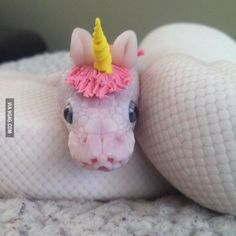 They sssssaid I could be anything, sssssso I became a unicorn. - 9GAG