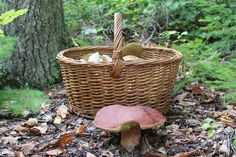 Im Wald Mushrooms, Picnic, Nature, Outdoor, Porcini Mushrooms, Peach, Forests, Stones, Outdoors