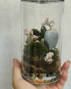 my terrarium 8 .8