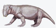 Lystrosaurus était un reptile préhistorique faisant partie de l'ordre des thérapsides – ou reptiles mammaliens. Cet animal vécut durant la période comprise entre le Permien supérieur et le Trias supérieur. Appartenant à la sous-classe des synapsides, il fut l'un des rares rescapés de la grande extinction permienne.