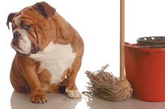 Is your dog peeing in the house or on other things he shouldn't? We've got tips to identify why it happens, how to stop it —and how to clean up dog pee!