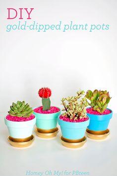 PLANTS - succulents, clay pot, paint, gold, color, DIY