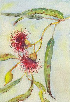 watercolour painting – Page 2 – Step, Skip, Pause Australian Wildflowers, Australian Native Flowers, Australian Art, Watercolor Leaves, Watercolour Painting, Floral Watercolor, Watercolours, Botanical Drawings, Botanical Art