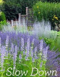 Front to back: Lavender, Cat Mint, Russian Sage. by brandi