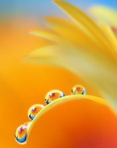 macro, droplets with color, high contrast, flowers within the water drops. Fotografia Macro, Dew Drops, Rain Drops, Amazing Photography, Nature Photography, Levitation Photography, Exposure Photography, Winter Photography, Beach Photography