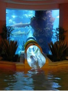 just an underwater aquarium slide, no big deal..