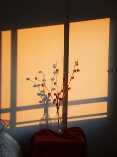 Delfina Carmona's light games, portfolio of the week Flower Aesthetic, Aesthetic Photo, Aesthetic Pictures, Cat Aesthetic, Aesthetic Backgrounds, Aesthetic Wallpapers, Photos D'ombre, Lumiere Photo, Shadow Pictures