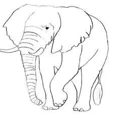 Coloriage d'animaux d'Afrique -  jedessine.com