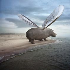 Create a creature profile for this beast. Use the 5Ws to create a short paragraph describing the animals habitat, personality and diet. (Photo: Fly away by Dariusz Klimczak)